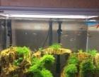 济南上门清洗鱼缸,鱼缸养护,鱼缸消毒鱼缸安装
