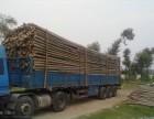北京植树竹竿厂家哪里卖植树竹竿价格