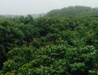武宣金鸡乡 土地 60000平米