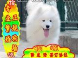 买纯种健康萨摩犬 赠送用品 - 签质保协议