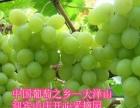 大泽山葡萄节迎宾山庄开心采摘园