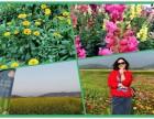 光明小镇周边农家乐 品质高 项目全 服务好 首选乐湖生态园