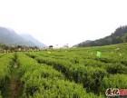 湖南华莱黑茶精准扶贫安化30万茶农
