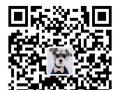 批发出售精品加菲猫 波斯猫 金吉拉 异国短毛猫