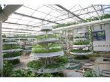 和丰温室工程供应优良的无土栽培基质,无土栽培蔬菜