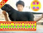 自家狗場繁殖 品質健康有保障 純種拉拉犬簽協議