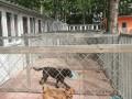 庞各庄宠物家庭寄养猫猫 狗儿长期寄养 散养环境可接送