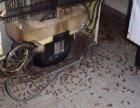 专业擦玻璃,打扫家,刮腻子,灭蟑螂耗子白蚁