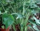 天津滨海新区花卉租摆绿植销售绿植养护服务公司海明花卉全城配送