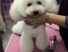 潍坊宠物美容学校排行榜 潍坊学习宠物美容 潍坊宠物美容学院