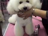 哈尔滨哪里有正规的宠物美容培训学校黑龙江想学宠物美容