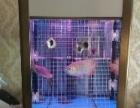 睿美观赏鱼鱼缸