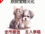 北新泾宠物火化宠物殡葬动物尸体无害化处理