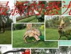 猿史恐龙模型展览出租