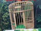 海洋生物展 企鹅展 创意百鸟展 租赁出租