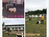 新国展家庭宠物训练狗狗不良行为纠正护卫犬订单