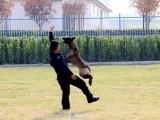 長沙守望者寵物訓練俱樂部