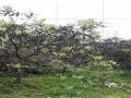 重庆市巴南区南泉镇600平方米设施农用地出租
