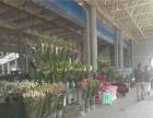 斗南花花世界商铺无忧返租做全世界的花卉生意10万
