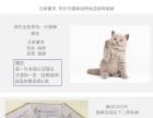 出售自家繁殖英短银渐层 蓝猫美短豹猫 包健康