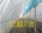 温室大棚寻求客户