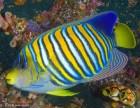宠物鱼 鱼缸清理 热带鱼养护 疾病治疗等