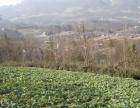 五峰城关 其他 300平米 可种植绿色食品和养殖猪牛羊鸡