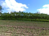 农安爬地柏价格 紫穗槐 金丝垂柳价格 金焰