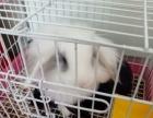 宠物兔子便宜出售