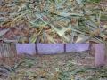 大量出售蝗虫蚂蚱活体速冻