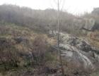 内乡县夏馆镇4000亩林地对外流转