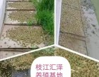 枝江汇泽青蛙养殖创业有保障服务更贴心