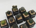 设计,多肉植物,苔藓微景观,设计室内植物摆设