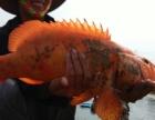 这个鱼很好看,这是黄金鱼,要的朋友联系我!