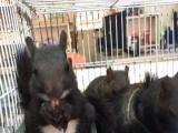 龙猫,飞鼠,迷你刺猬雪地魔王松鼠,蜜袋鼯