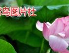 郑州柯达数码网上冲洗照片/婚纱照放大/团体合影