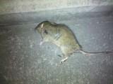 郫都区专业灭鼠公司