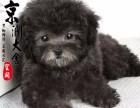 哈尔滨最好的犬舍是哪家