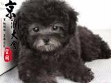 北京哪里卖纯种泰迪犬的