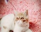 加菲猫四个月出售