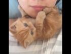 加菲猫母子诚心出售