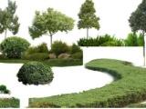 上千园林,四川苗木批发基地厂家专业四川苗圃基地生产多年