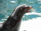 专业海狮表演特技演出鳄鱼演出企鹅演出全国巡展价格