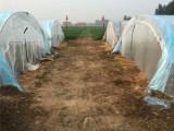 志广丝网特卖蚂蚱马蜂养殖网罩密度高加厚新料幼虫好成活
