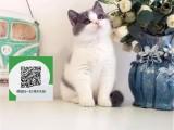 镇江哪里卖蓝猫 镇江哪里有宠物店 镇江哪里卖宠物猫便宜
