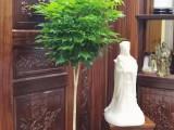 北京昌平园林绿化养护庭院绿化养护