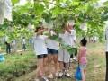 长广农业初秋葡萄成熟了,快来采摘吧