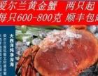 各种进口海鲜-俄罗斯帝王蟹、爱尔兰黄金蟹等批发零售