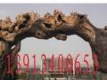水泥假山生态园大门榕树溶洞制作