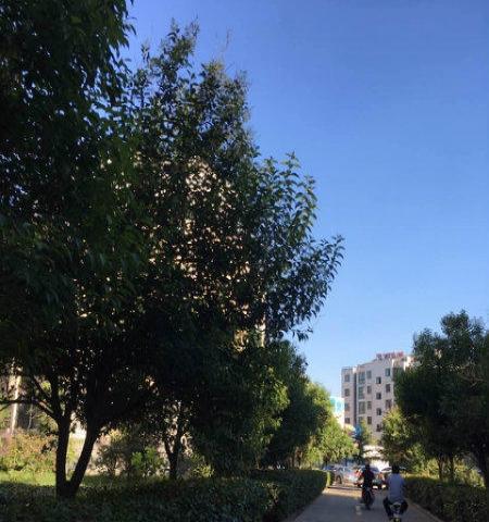 杨柳国际新城 免税送储精装修复试可贷款 性价比高